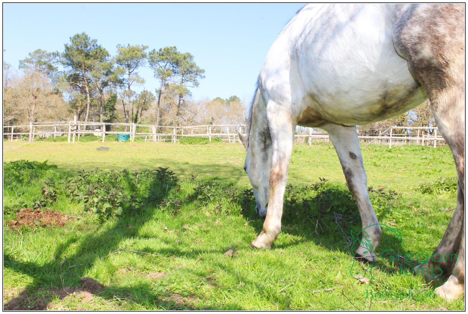 vacances randonnées cheval bretagne botsegalo